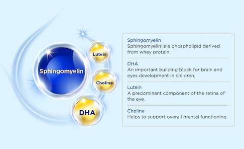 sphingomyelin